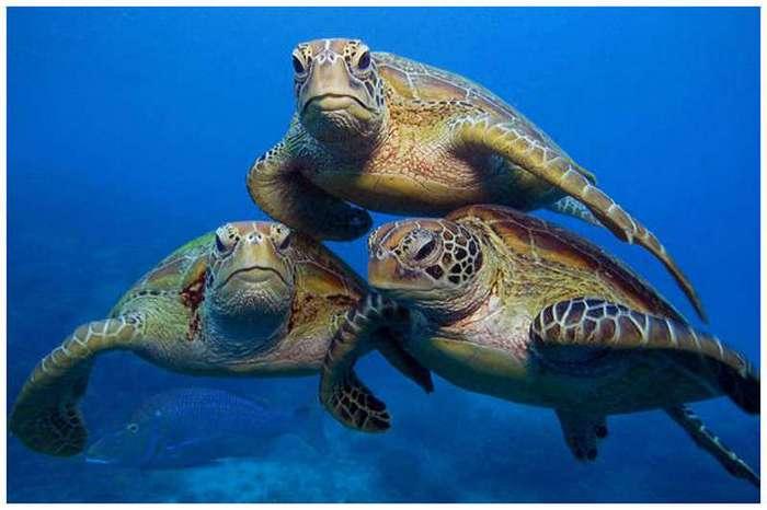 Покатай меня, большая черепаха