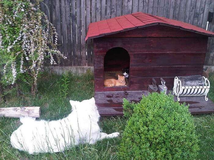 20 необычных архитектурных решений для собачьей конуры