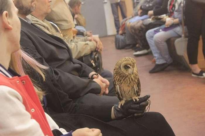 25 странных вещей, которые люди перевозят в метро