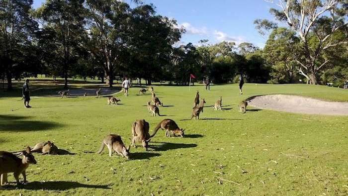 28 причин, по которым от Австралии стоит держаться подальше