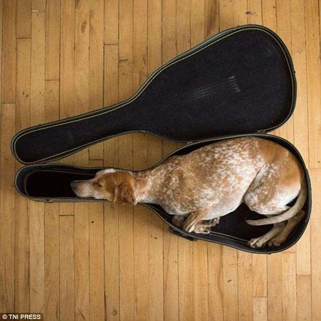 Самые невероятные места, в которых могут заснуть собаки