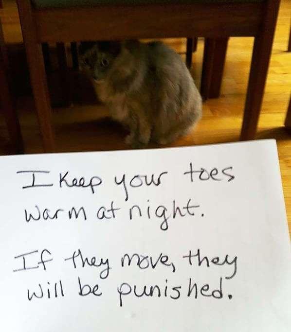 Как пристыдить кошку, если она оборзела