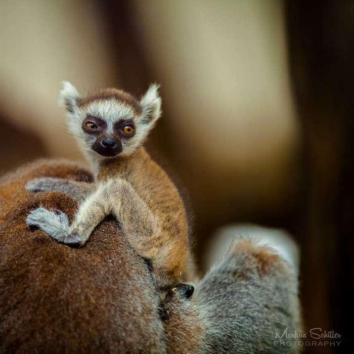 Подборка забавных фотографий животны