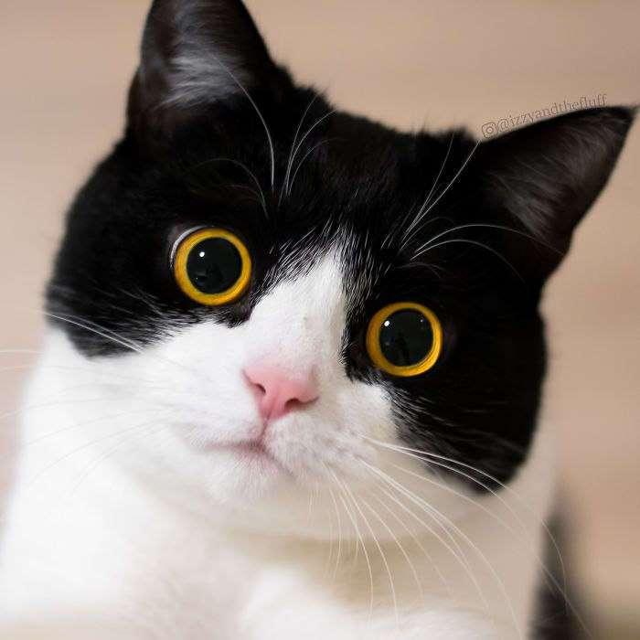 Это Иззи — кошка с самой выразительной мордой, которая влюбила в себя интернет.