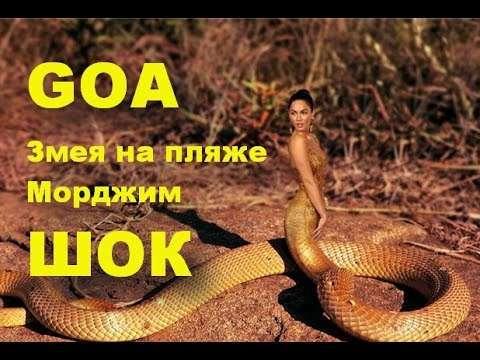 ГОА Змея на пляже ШОК Морджим GOA