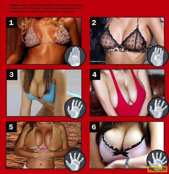 Полезная информация для мужчин о женской груди (5 фото)