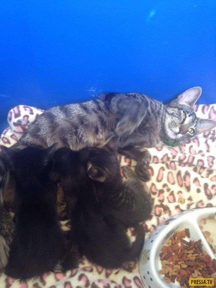 Отдых, рыбалка и кошка с сюрпризом (8 фото)