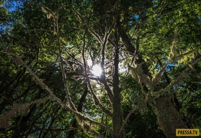 Реликтовая самшитовая роща в Сочи (18 фото)