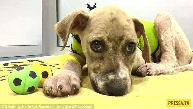 Удивительное спасение щенка, обречённого на смерть (16 фото)