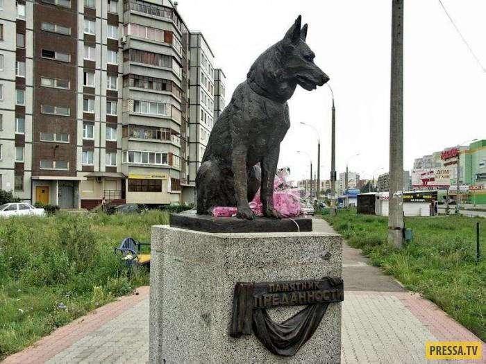 Верный пёс, который до последнего вздоха ждал своих хозяев (2 фото)