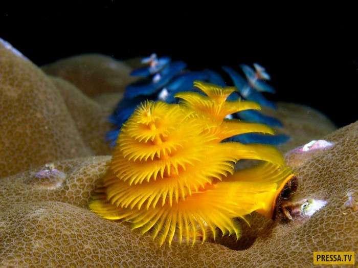 ТОП-10 необычных и почти неизвестных обитателя морских глубин (10 фото)