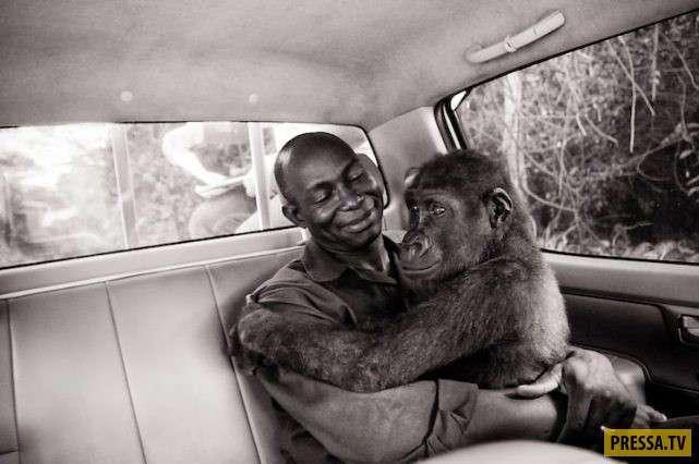 Шокирующие и отвратительные вещи, которые могут поразить путешественника в Африке (13 фото)