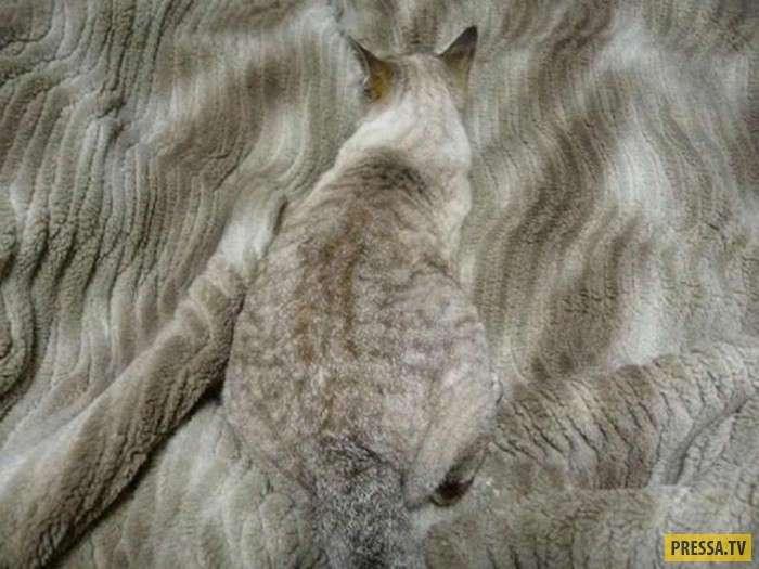 Попробуйте, найти кота (22 фото)