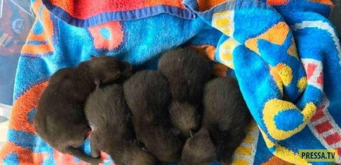Мужчина думал, что нашёл щенят, но оказалось, что их мама вовсе не собака! (3 фото)