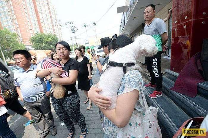 В Китае, наконец-то, запретили продажу собачьего мяса на фестивале (10 фото)