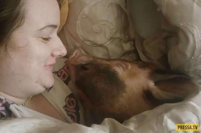 В одной постели со свиньей и скунсом (6 фото)