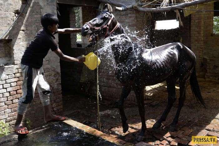 Будни жизни людей в Индии (20 фото)