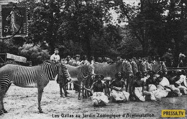 ТОП-12 зоопарков где вместо зверей были люди (28 фото)
