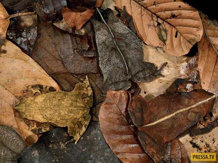 А вы сможете их найти? Невероятные примеры камуфляжа животных (18 фото)