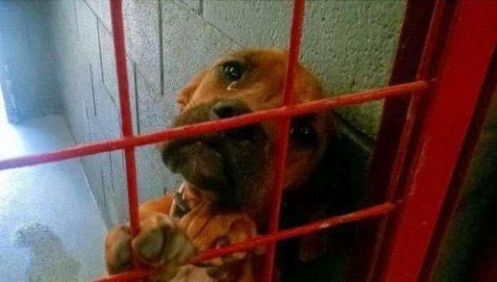 История этой плачущей собаки разлетелась по Сети. Но теперь ее жизнь изменилась!