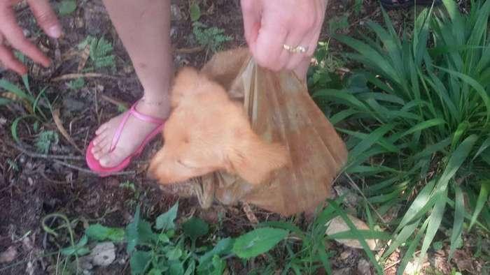 Пост на Facebook спас щенка, умиравшего в полиэтиленовом пакете!