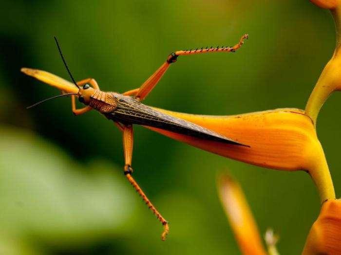 Лучшие фотографии National Geographic (17 фото)