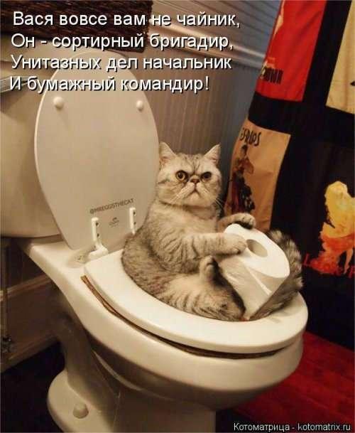 Лучшая котоматрица недели (16 фото)