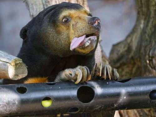 Медведи, у которых закончились аргументы в споре (12 фото)