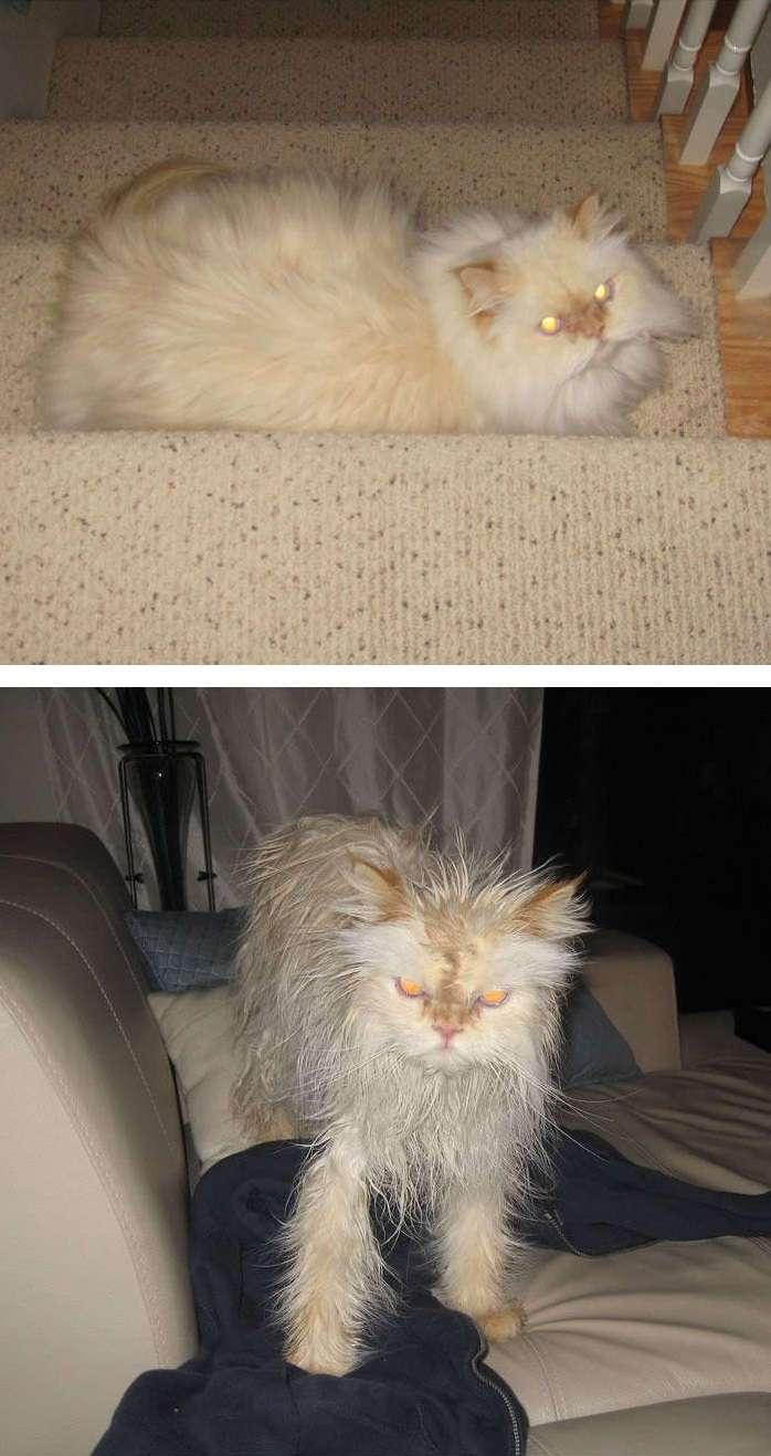 Мойдодыр: очень смешные и очень мокрые питомцы
