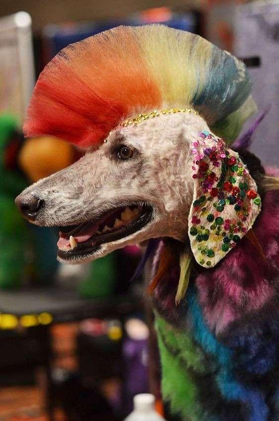Красота или издевательство над животными? (20 фото)