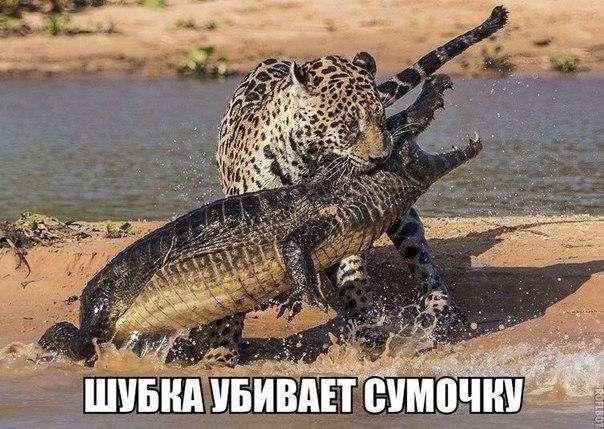 Смешные картинки с надписями (39 фото)