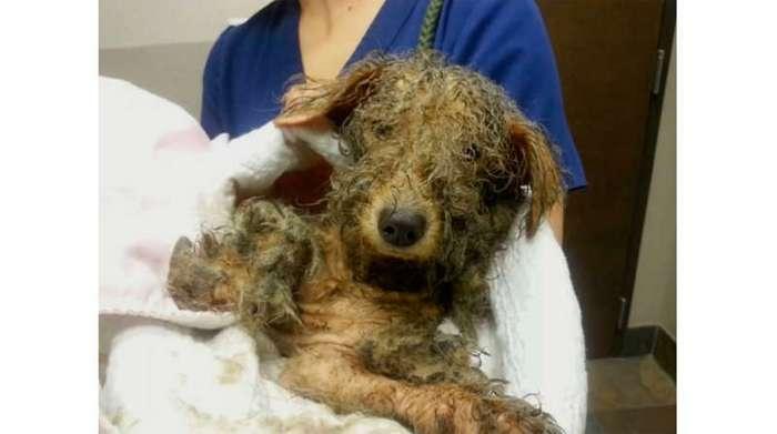 Бедная собака прошла огонь и воду, чтобы стать белым лебедем. Эта история разбила мне сердце!