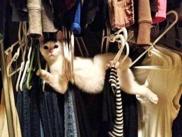 Мы собрали 17 крутейших фоток котов. На это стоит посмотреть!