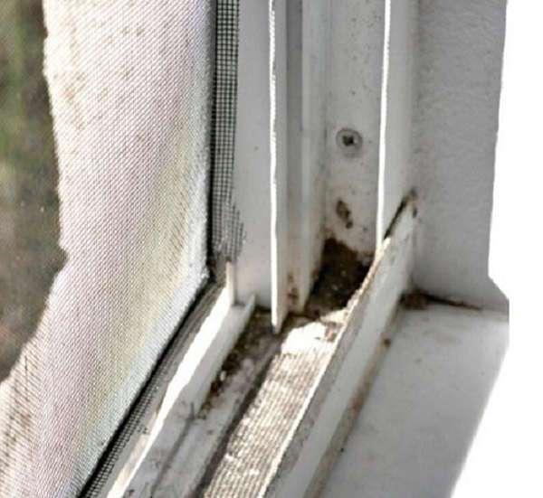 С этим трюком окна заблестят чистотой всего за пару минут. Почему я раньше о нем не знала?