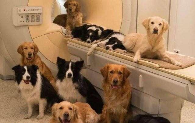 Научная точка зрения: вот почему собаки любят ходить по пятам за хозяином