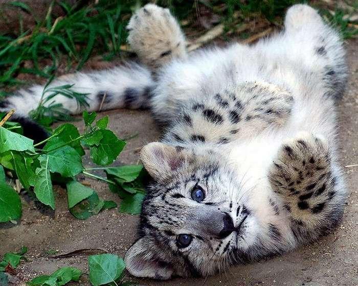 Котятки (10 фото)