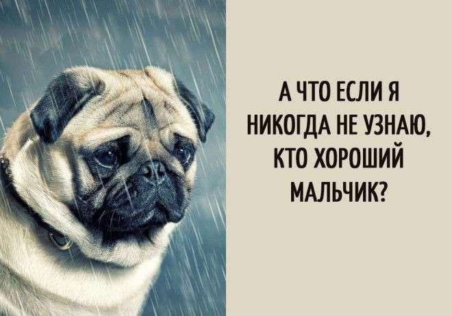 Забавные мысли, которые наверняка посещали каждую собаку (16 фото)