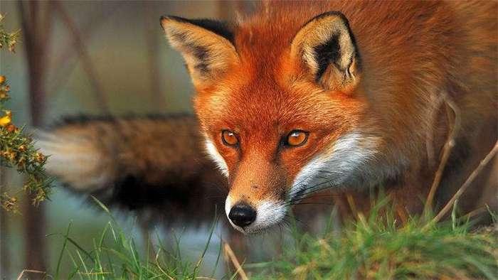 10 опасных животных, которых все считают милыми и добрыми (10 фото)