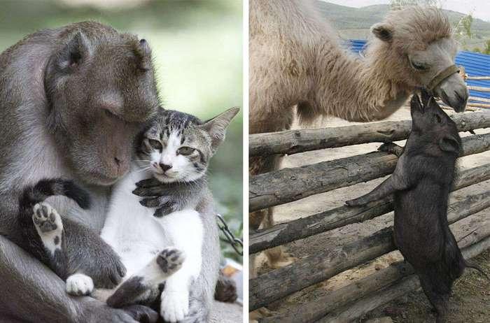 Дружба среди животных есть! (21 фото)