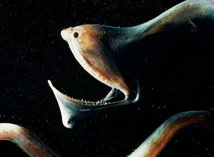 15 самых жутких созданий из глубин океана (16 фото)