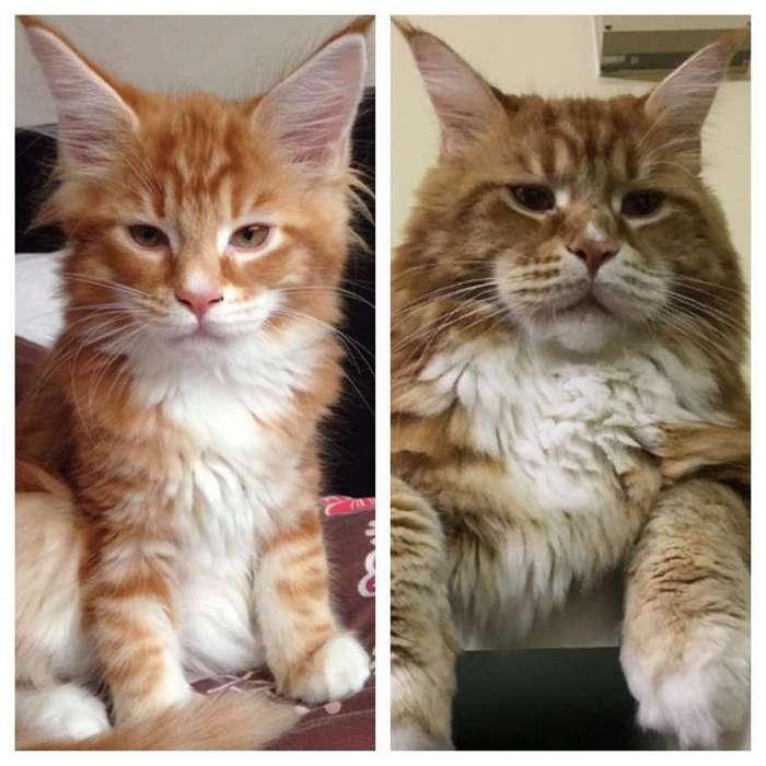Знакомьтесь, Омар — самый длинный кот в мире (12 фото)