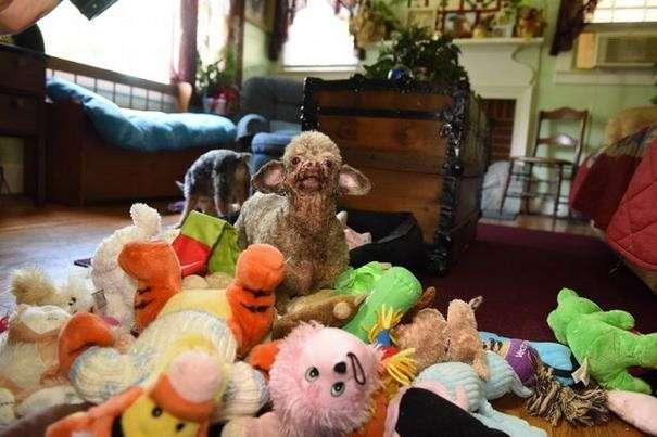 Собака всю жизнь просидела в подвале и теперь не нарадуется жизни (7 фото)
