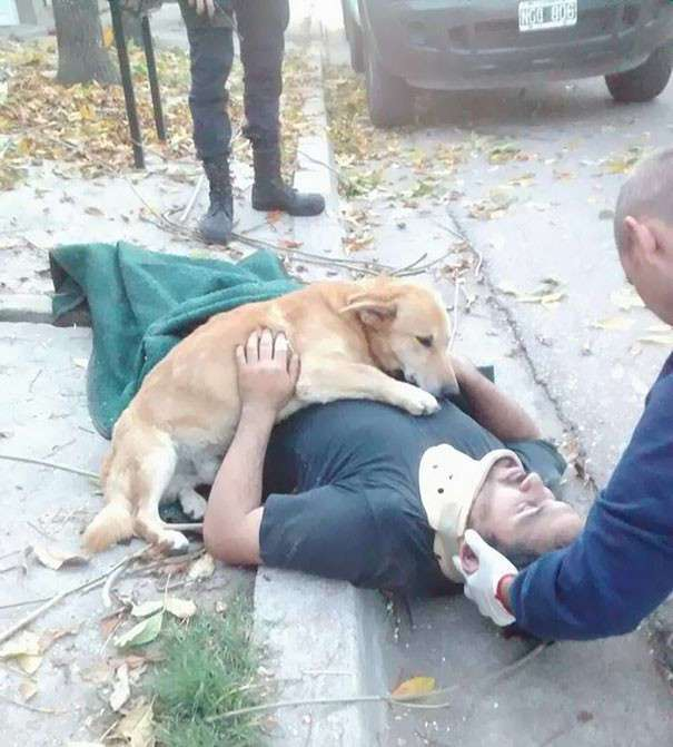 Верный пес не оставил хозяина, получившего травму (7 фото)