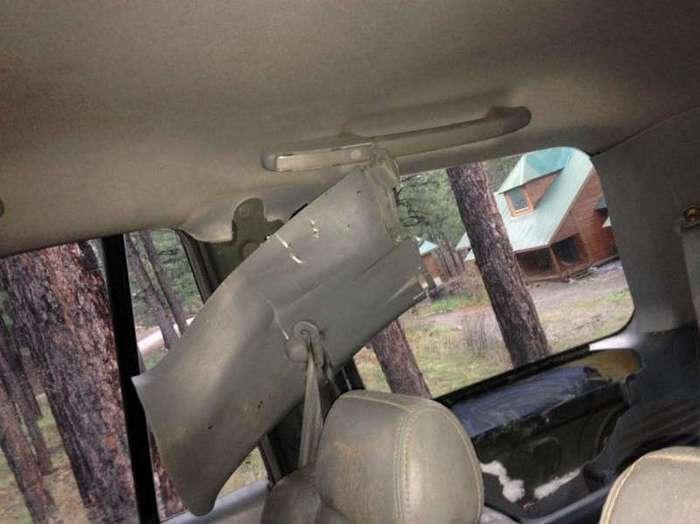 Медведь закрылся в автомобиле и... в общем - кирдык машине (5 фото)