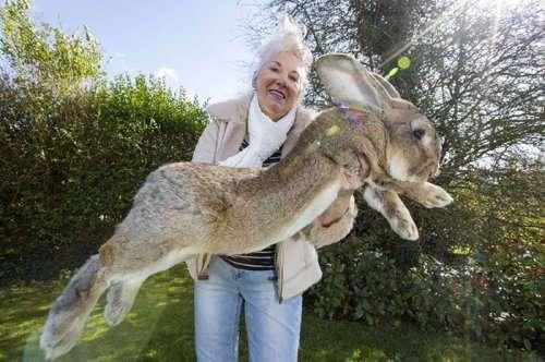 У самого большого кролика в мире появился соперник... его собственный сын Джефф!