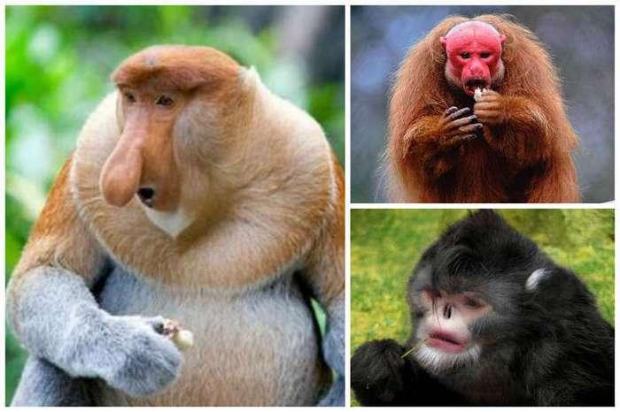 Вспомните о родственниках и согласитесь, что мы очень похожи (25 фото)