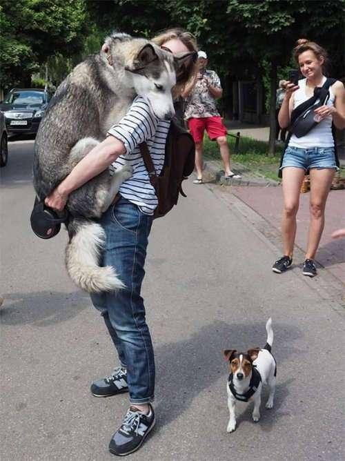 Собаки-бояки, которые вызовут вашу улыбку (27 фото)