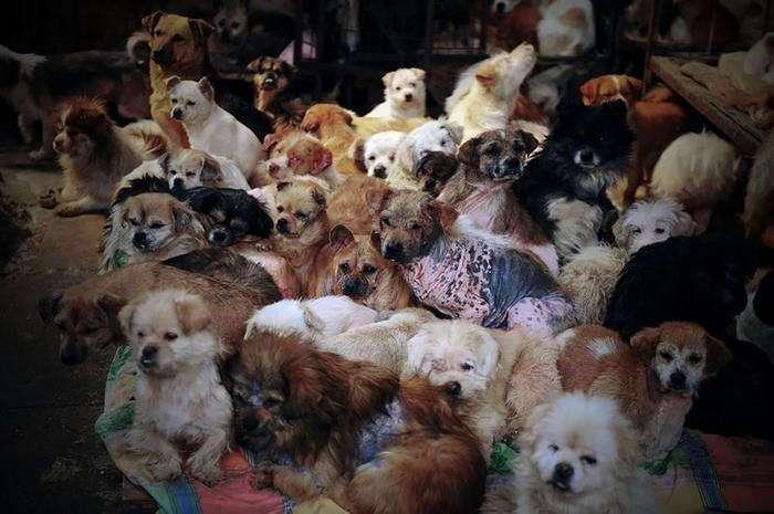 Китайцам наконец-то запретили есть собак (11 фото)