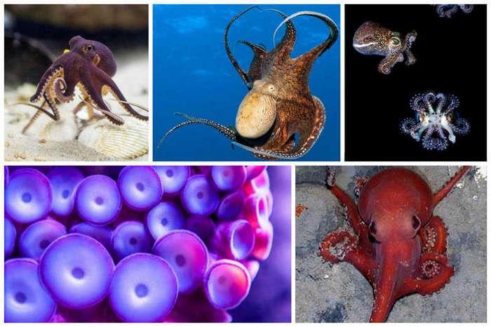 Где-то в море без дорог ходит, бродит осьминог (21 фото + 2 видео)