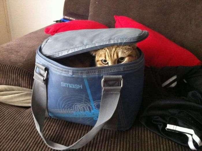 Кошки - хозяева в доме (18 фото)